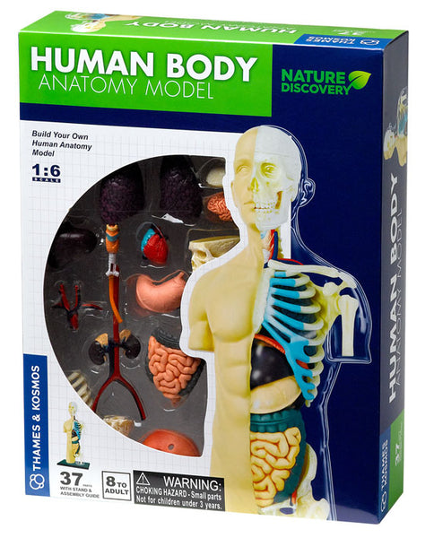 Thames and Kosmos Human Body Anatomy Model