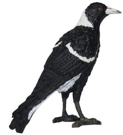 Science and Nature Magpie