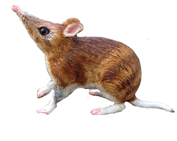 Science and Nature Bandicoot