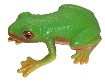 Science and Nature Red Eyed Green Tree Frog