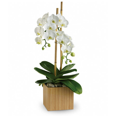 Opulent Orchids - Giving Blooms