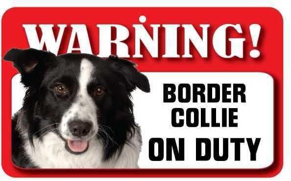 DS009 Border Collie Pet Sign