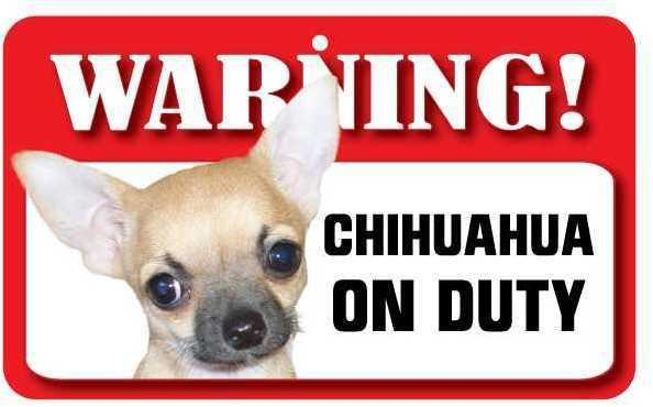 DS017 Smooth Coat Chihuahua Pet Sign