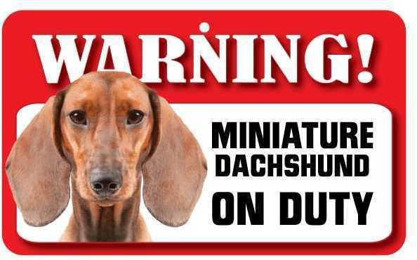 DS024 Smooth Haired Miniature Dachshund Pet Sign