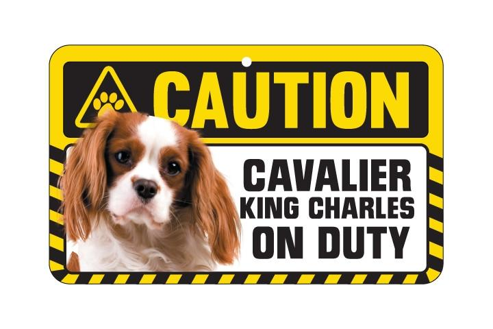 Cavalier King Charles  Blenheim Caution