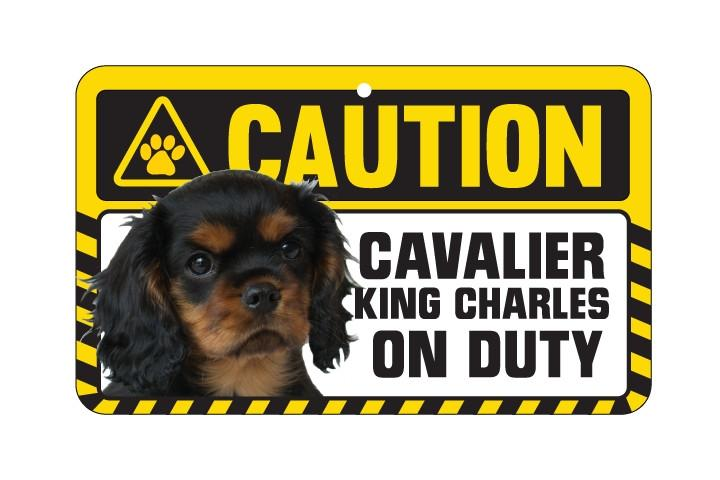 Cavalier King Charles  Ruby Caution