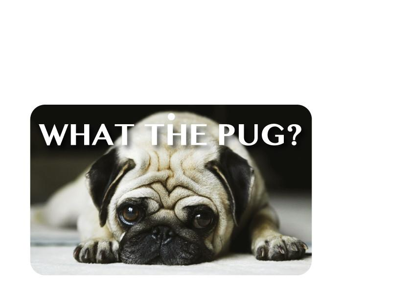 FN066 Fun Sign - What The Pug?