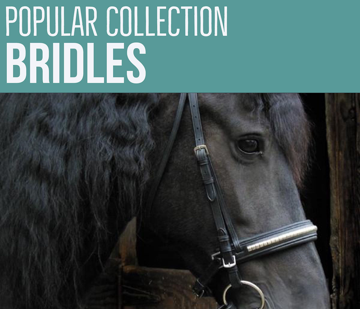 Draft Warmblood Bridles Bitless Bridles