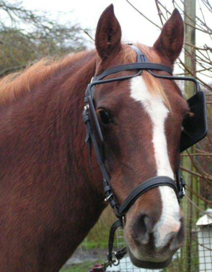 Bitless Bridle Beta Driving Headstall - Draft or Warmblood, Bitless Bridle - Warmblood Tack Store