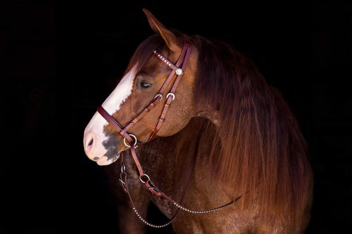 Dr. Cook's Beta Deluxe Western Headstall - Warmblood or Draft