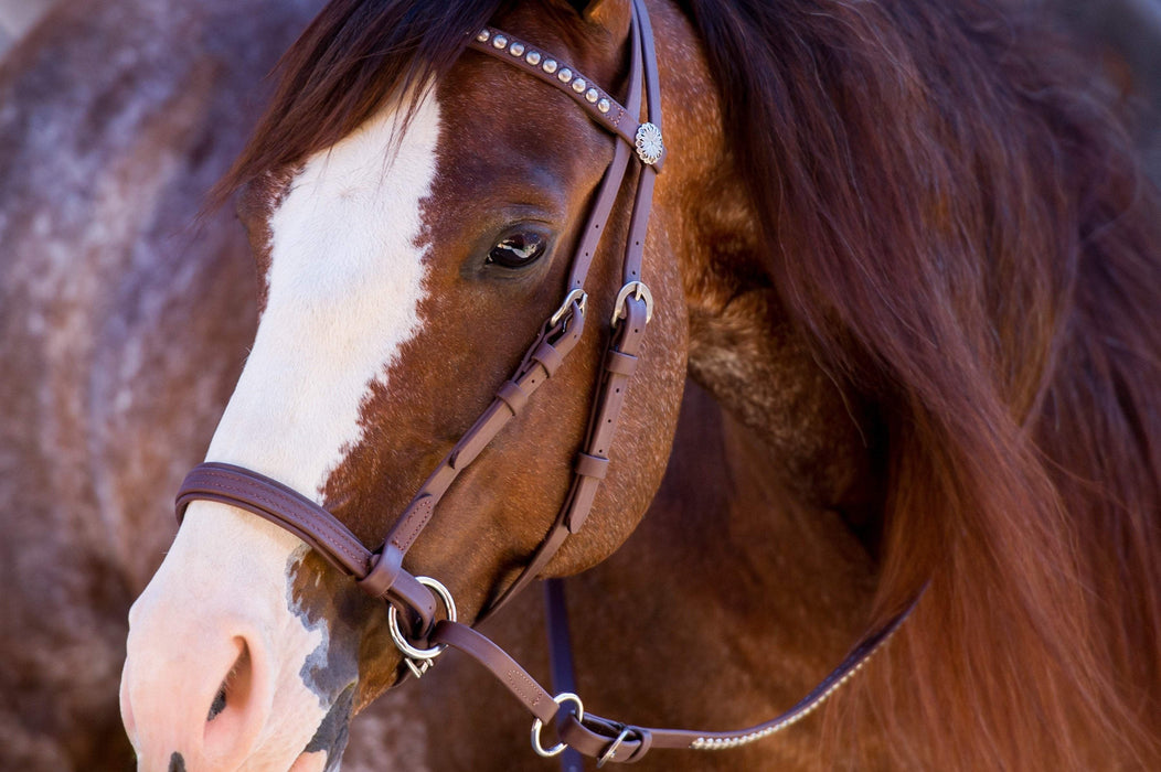 Beta Deluxe Headstall - Dr. Cook's Bitless Bridle