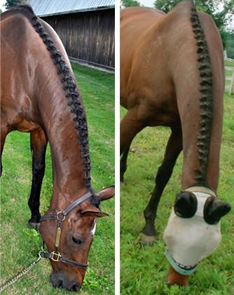 Braideez Braiding Wire, Grooming Supplies - Warmblood Tack Store