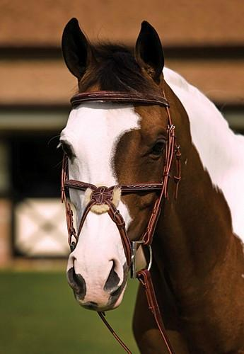 Fancy Square Raised Padded Figure 8 Bridle with Laced Reins, Bridle - Warmblood Tack Store