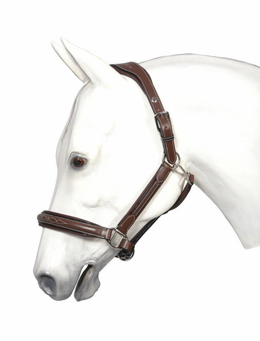Warmblood Stree Free Fancy Halter