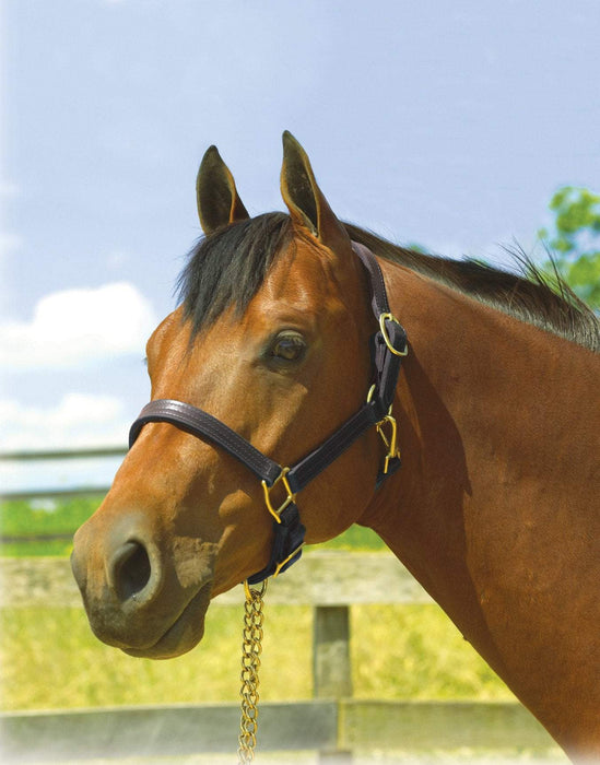 "1"" Leather Show Halter, Halter - Warmblood Tack Store"