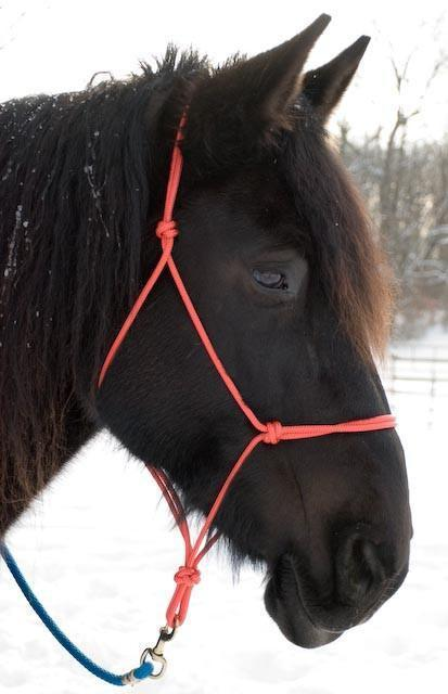 Rope Halter - XL Draft Size too!, Halter - Warmblood Tack Store