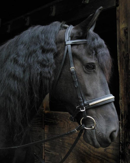 Clincher Nose Dressage Bridle - Warmblood or Draft, Bridle - Warmblood Tack Store