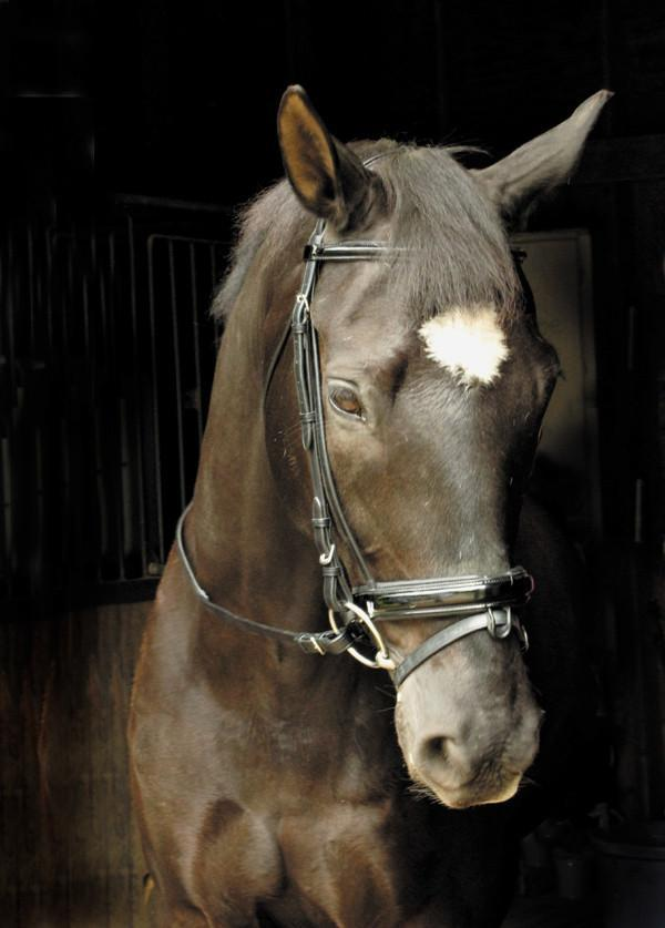 Draft Patent Leather Dressage Bridle, Bridle - Warmblood Tack Store