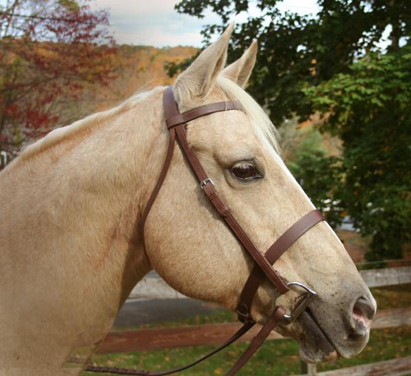 Warmblood Hunting/Working Bridle, Bridle - Warmblood Tack Store