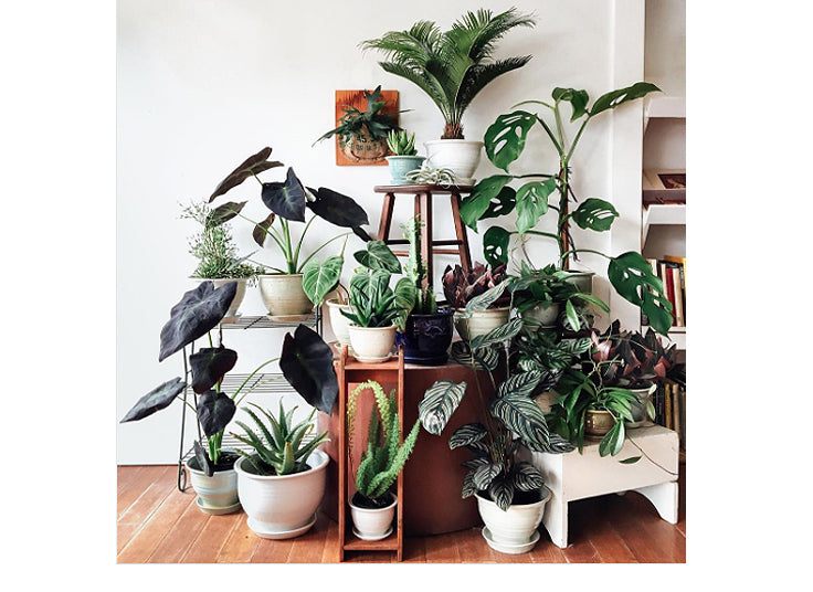 Modern Greenery: The Best Online Sources for Handmade Planters and Pots