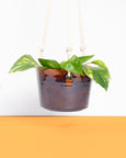 Hanging Planter: Sweet Tea