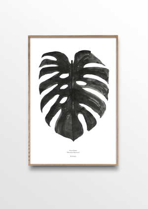 Monstera Deliciosa - Black