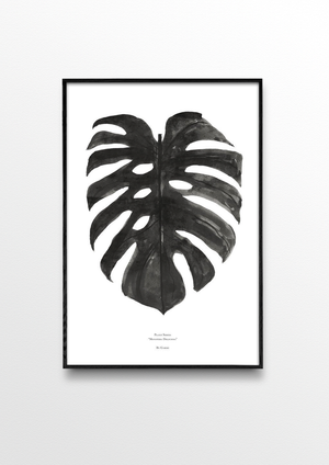 MONSTERA DELICIOSA BLACK