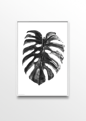 MONSTERA DELICIOSA - LIMITED ED