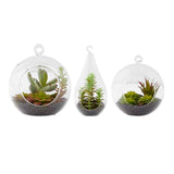 Glass Terrarium Ornaments w/ Succulents