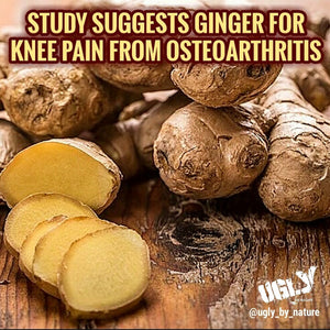 Study suggests ginger for knee pain from osteoarthritis