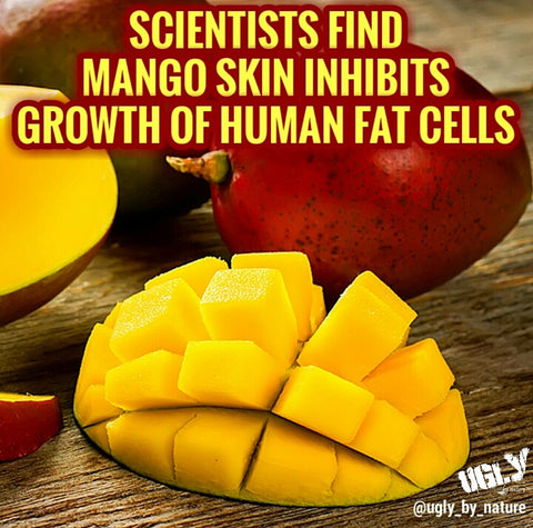 Mango skin inhibits human fat cell growth ugly by nature