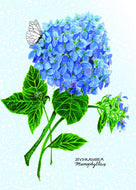 Hydrangea Give a Fig Card