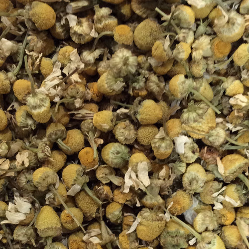 Chamomile - Herbal