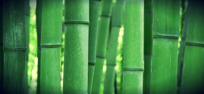 5 Super Powers of Bamboo Charcoal You Need to Know