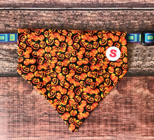Harvest mini Pumpkins collar Bandana