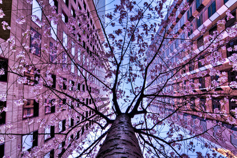 Ali-Ertuerk-San Francisco,-Tree-of-Duo-NiQOO
