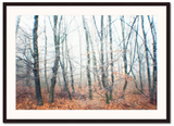 Lost-in-the-trees-Nima-Chaichi-NiQOO-frame