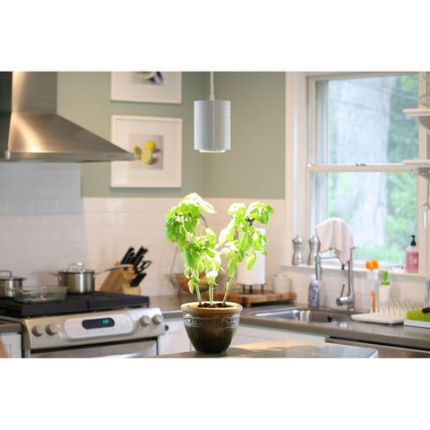 Aspect LED Growlight in a kitchen with Basil