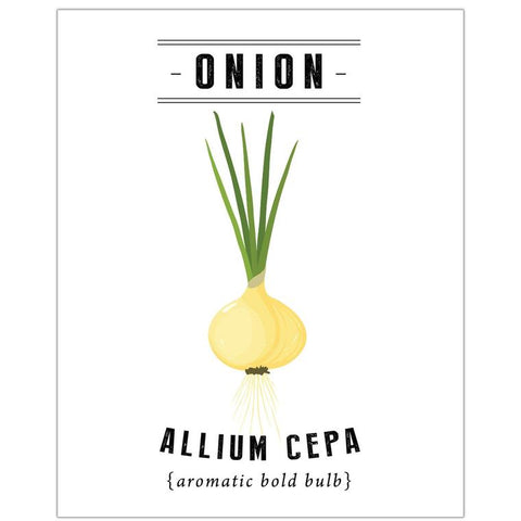 Onion Botanical Print