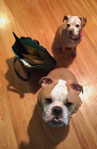 two dogs and a bag with Etsy orders
