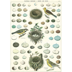 Cavallini & Co Wrap - Birds, Nests and Eggs