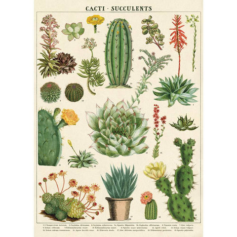 Cavallini & Co Wrap - Cacti and Succulents