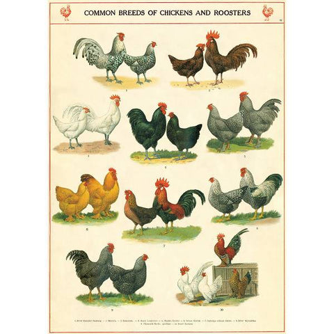 Cavallini & Co Wrap - Roosters and Chickens, Dragonflytoys