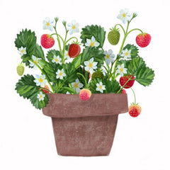 Greeting Card - Deb Hudson - Strawberry Pot