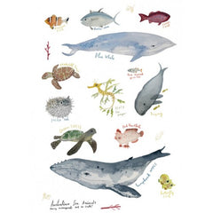 Greeting Card - Sea Animals JM 226