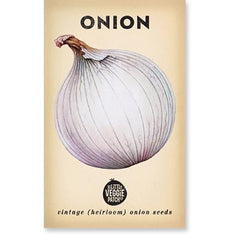 Heirloom Flower Seeds - Onions 'Gladalan' White Dragonflytoys