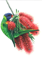 Greeting Card - Matteo Grilli - Rainbow Lorikeet,Dragonflytoys