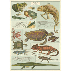 Cavallini & Co Wrap - Reptile and Amphibians