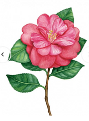Greeting Card - Camellia Maxine_14