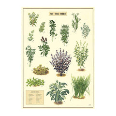 Cavallini & Co Wrap - Kitchen herbs